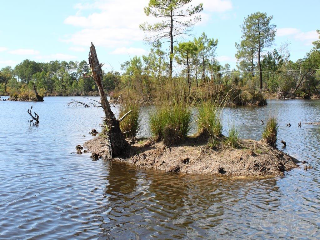 Akadók, fák, bokrok, szigetek… a szokásos módszerekkel itt lehetetlen lenne a horgászat