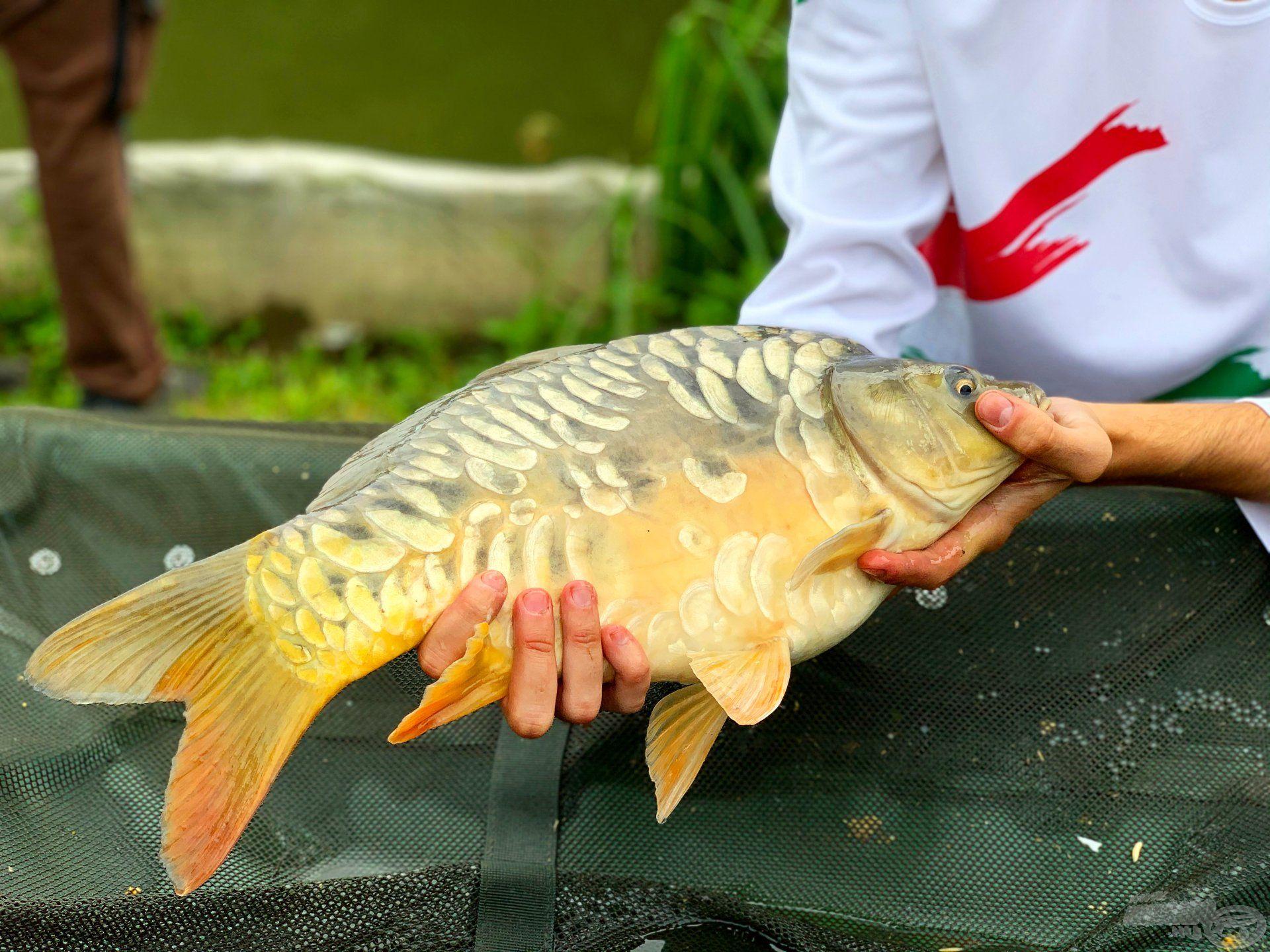 Gyönyörű pikkelyzetű hal