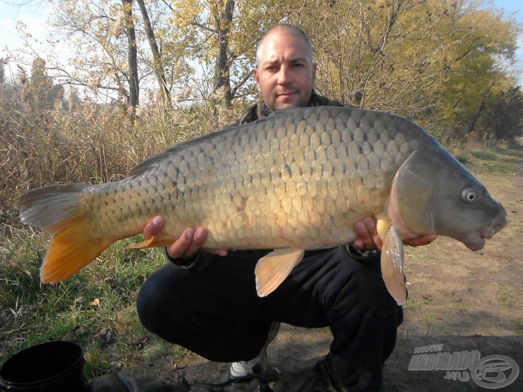 8,50 kg-os tőponty
