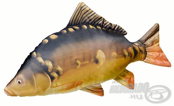 A bojlis és nagyhalas feederhorgászok kedvence egy ekkora ponty, hiszen mérete igen tekintélyes, 90 cm hosszúságú