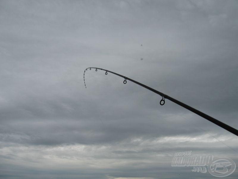 Nagy hal a horgon