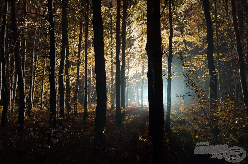 Fény az erdőben