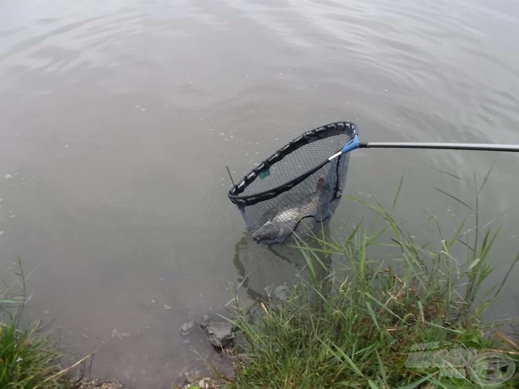 És… benne van, megvan a nap első hala!