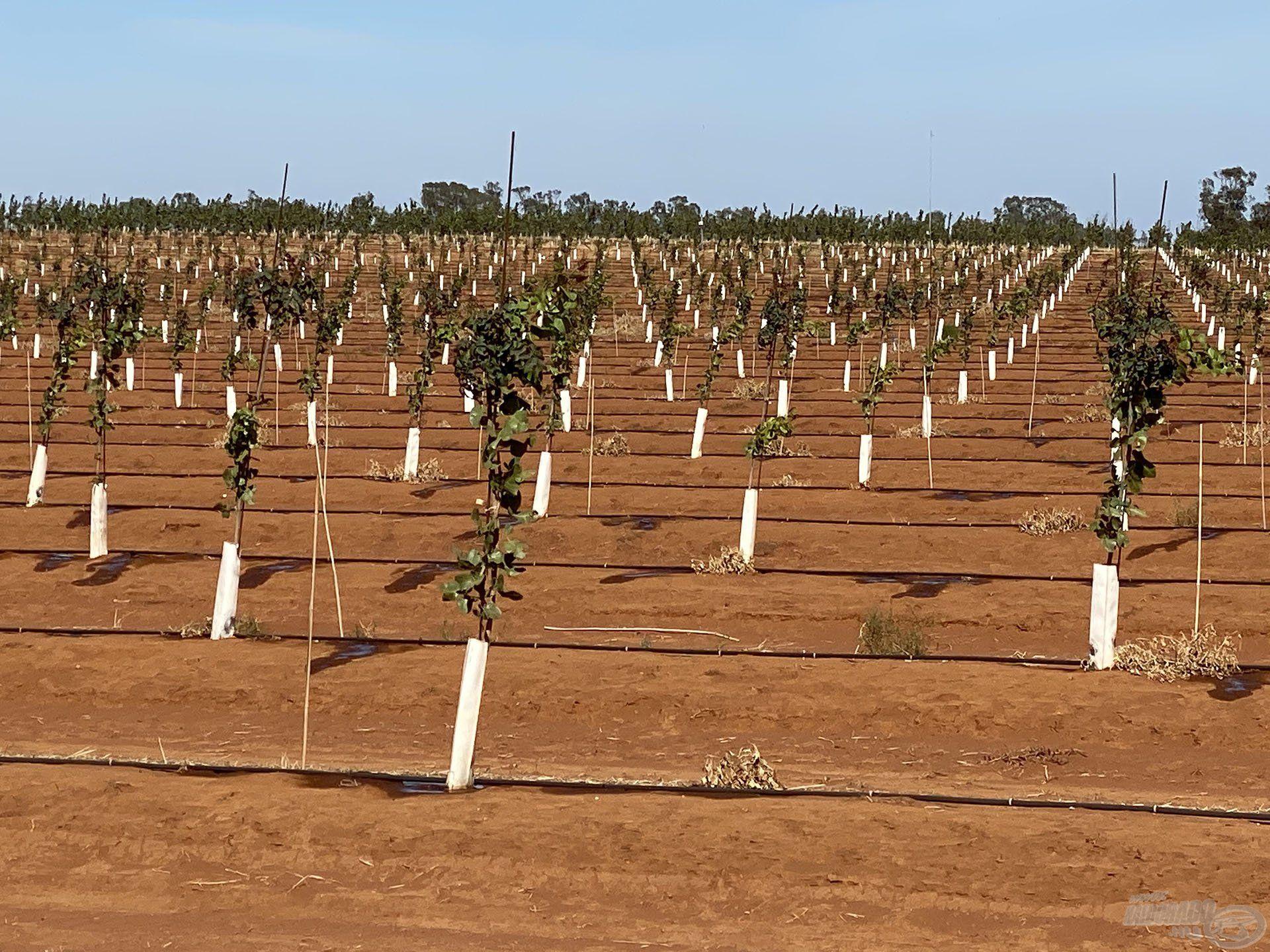 Számunkra elképzelhetetlenül magas szinten van a növénytermesztés és állattartás
