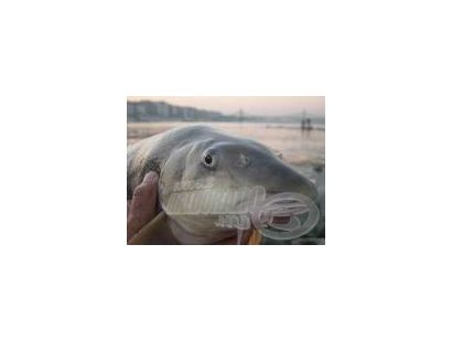 A rakós botos horgászat ABC-je 10.rész - Szerelék ötletek V. MárnaPapp József mesterhorgász segítségével