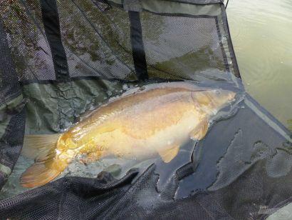 A szeszélyes tavasz nagy halai
