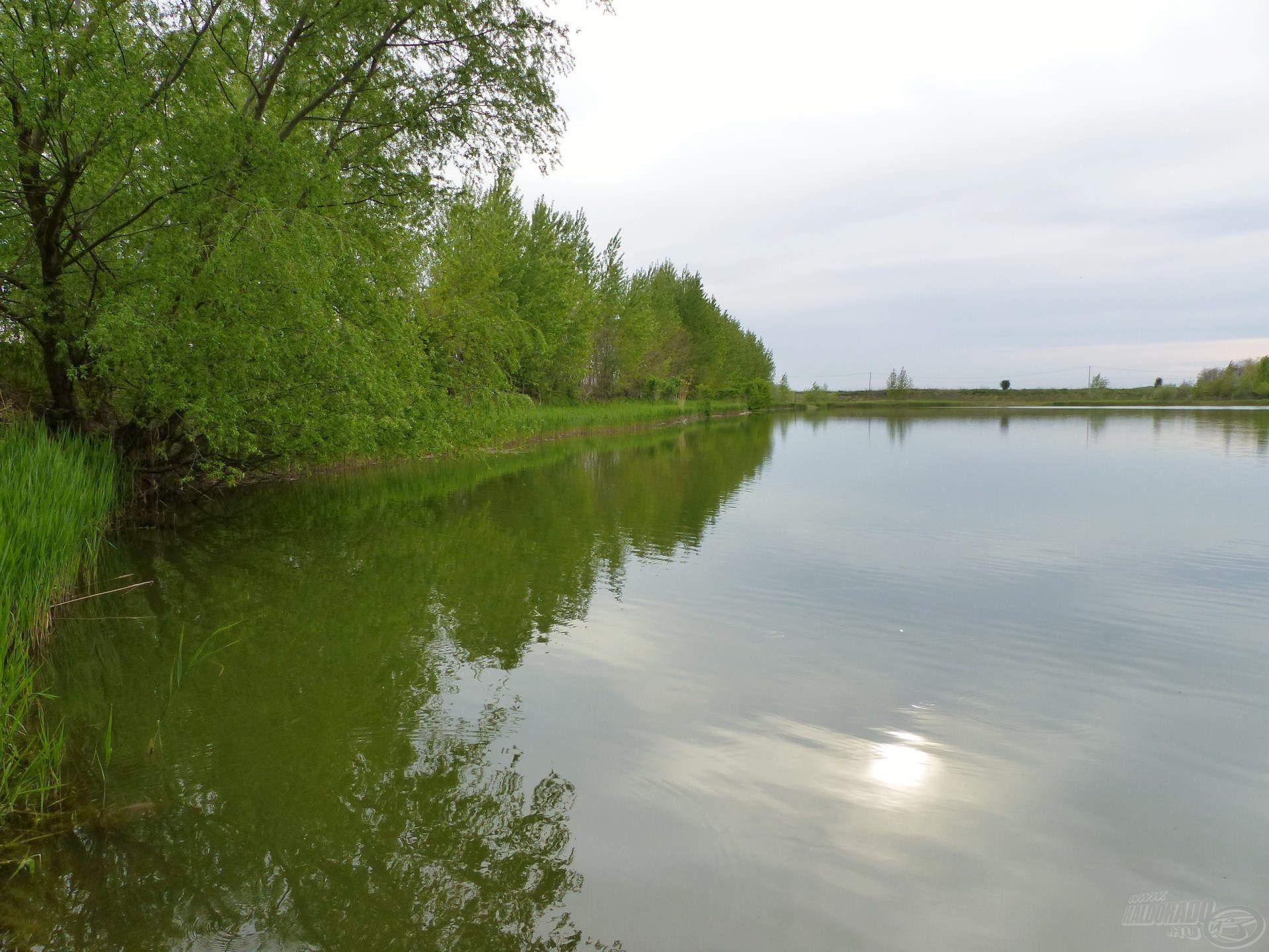 """Kedvenc horgászhelyem ezen a tavon, a tó """"sarki"""" része, az 1-es állás. Ezt választottam most is"""