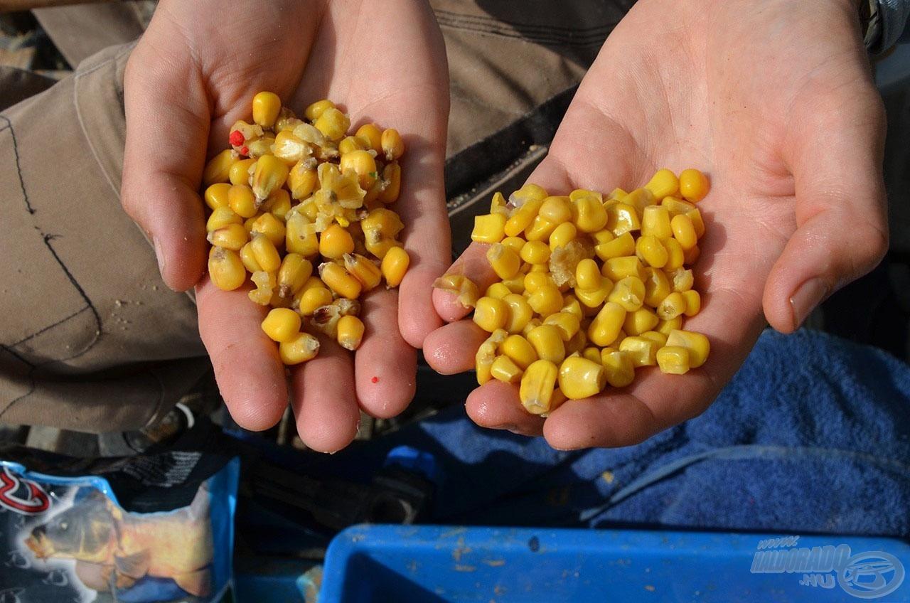 A kukorica minden formájában kedvelt pontycsemege