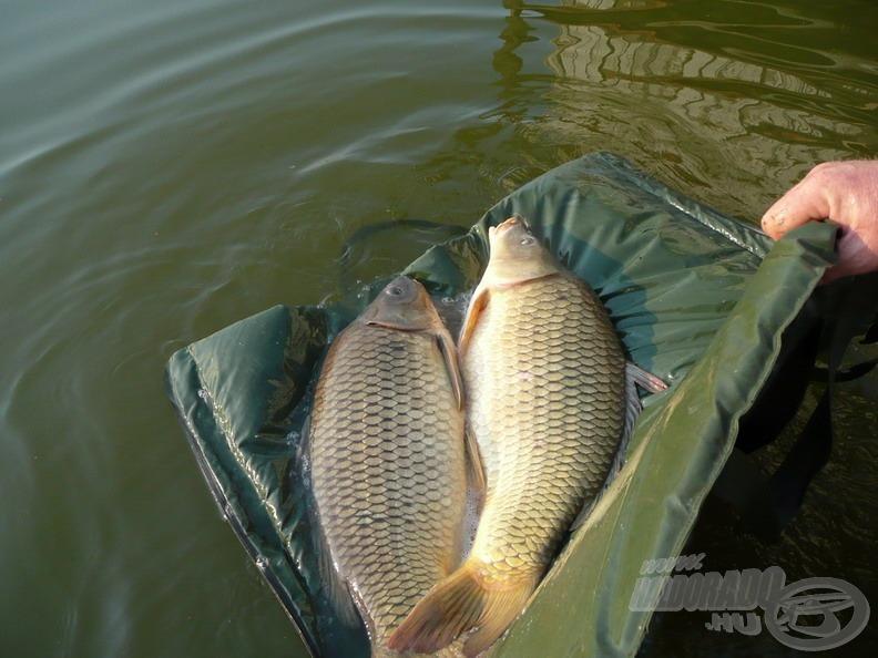 Mérlegelés és fotózás után minden hal visszanyerte szabadságát