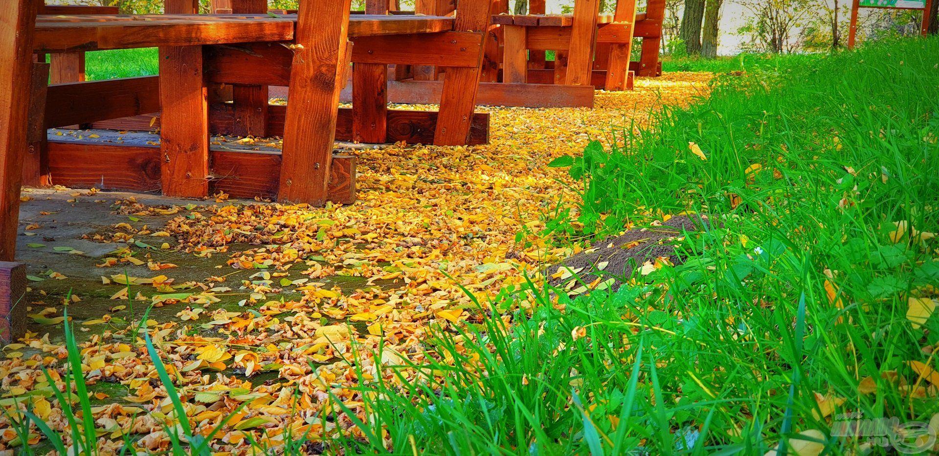 Az októberi nyárban csak a fák lehullott, elsárgult levelei árulkodtak az évszakról