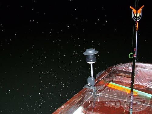 Az éjjeli horgászat árvaszúnyog-rajzásban tényleg megkívánja az ilyen kiegészítőt!