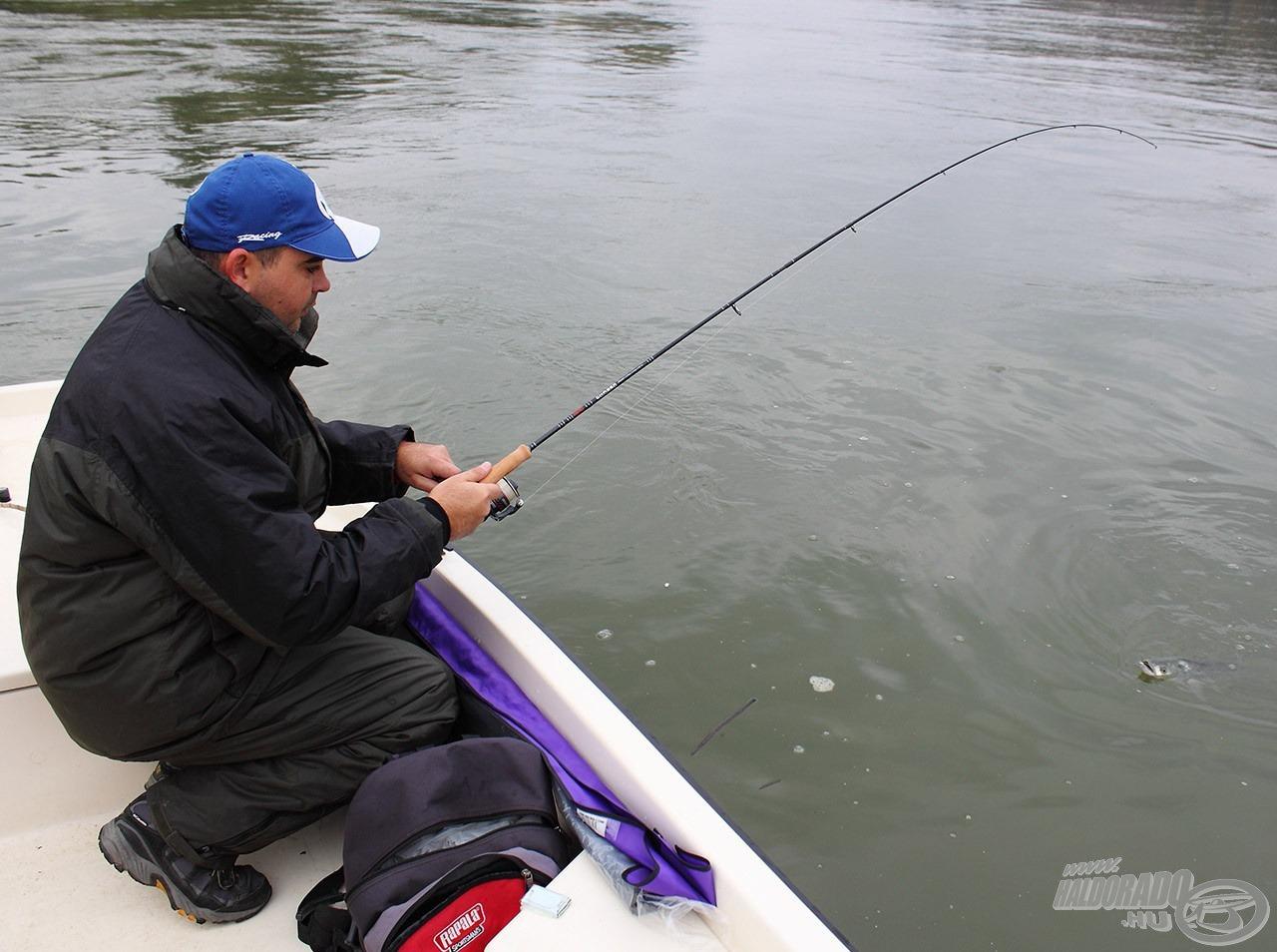 A pergető bot a hal minden mozdulatát közvetíti