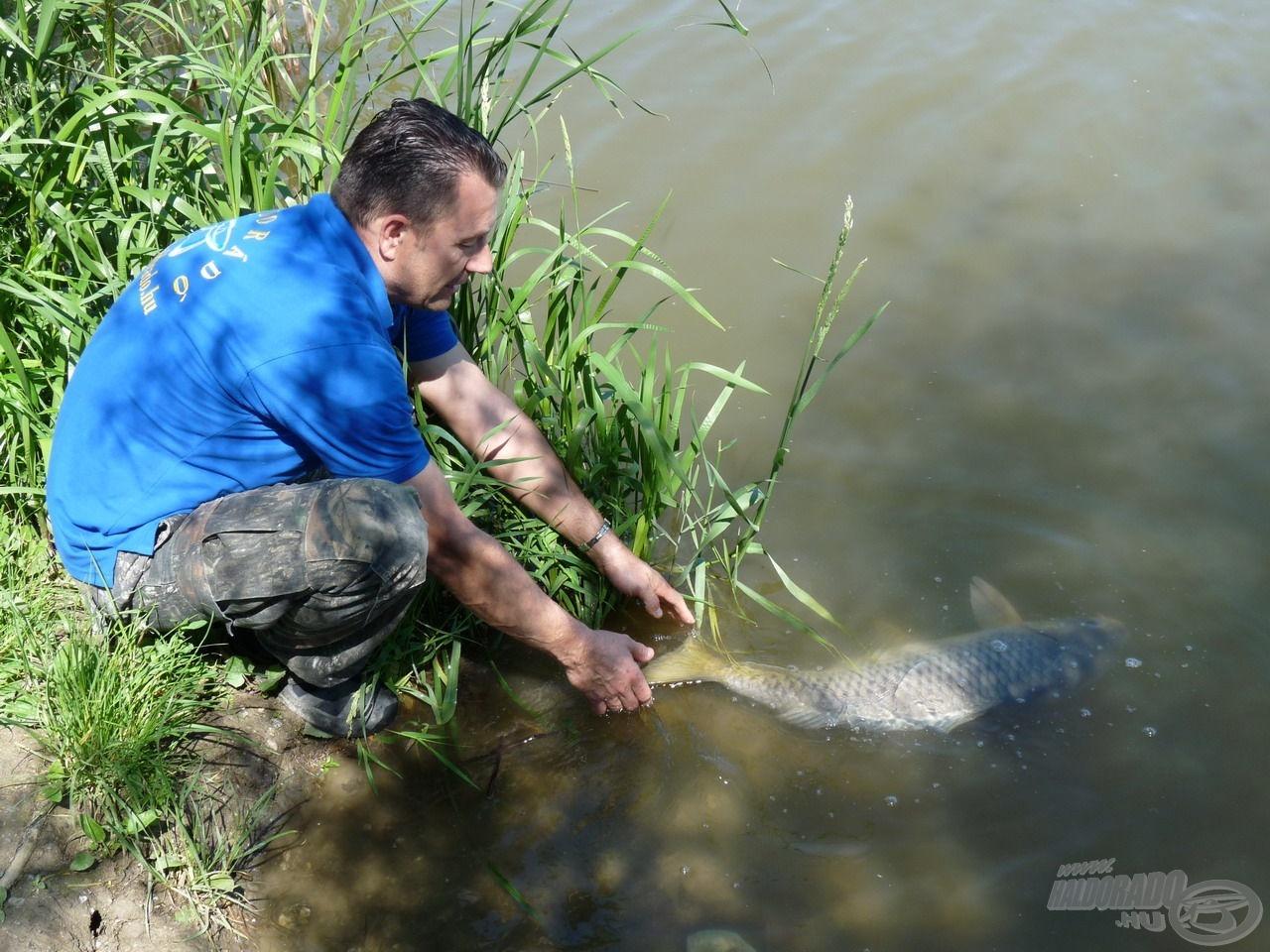 A nagyponty-horgászat alapja a kíméletes bánásmód és a C&R!