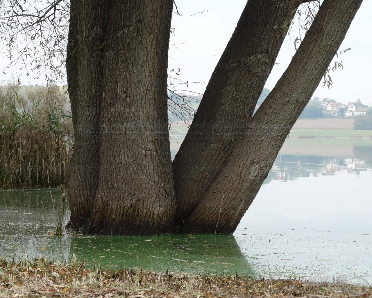 A vízben álló fák törzsén jól látható a vízszint csökkenése