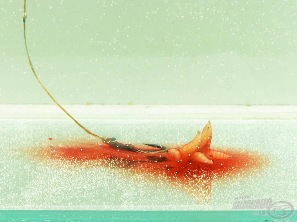 A vízben látványos, ahogyan a dip oldódik az izgő-mozgó csontkukacokról