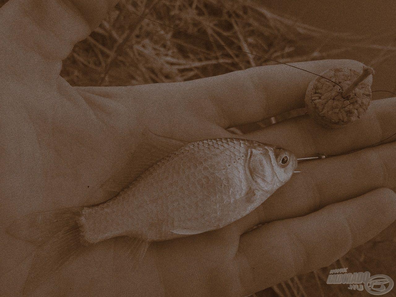 Megvan életem legelső hala! Boldogságom leírhatatlan!