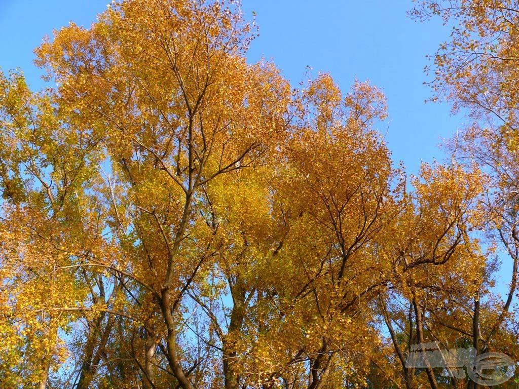 A fák is őszi viseletbe bújtak már