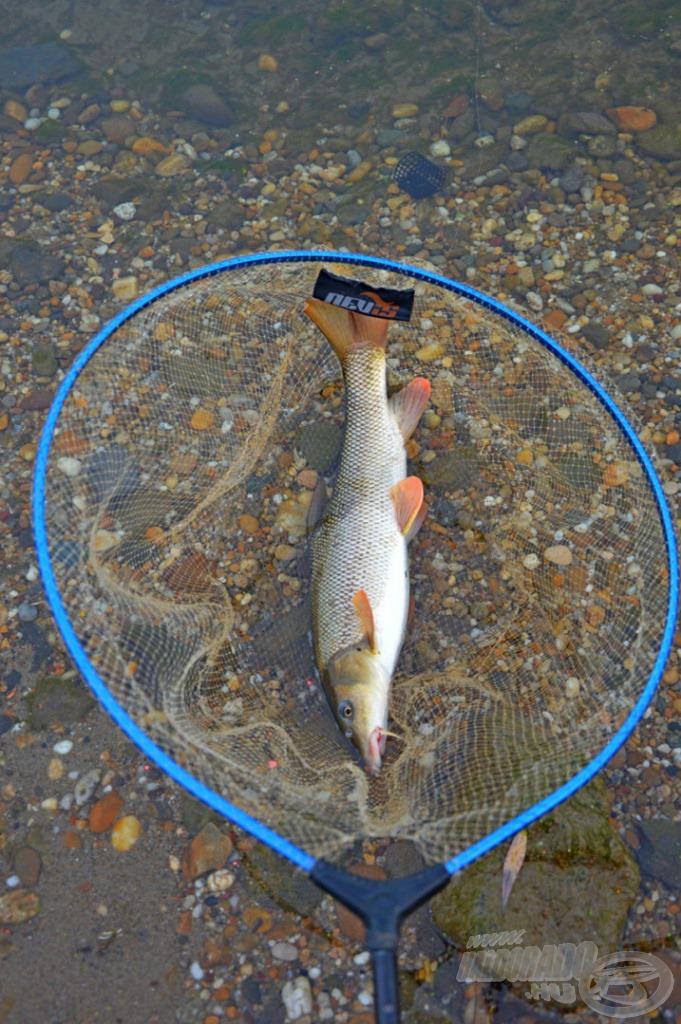 … és a damilos merítőháló olyan eszközök, amelyek nagyban megkönnyítik a Dunai horgászatot