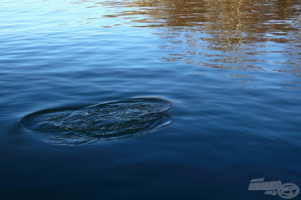Az első burványa, de a tiszta vízen keresztül már látható volt, ez bizony komoly süllő