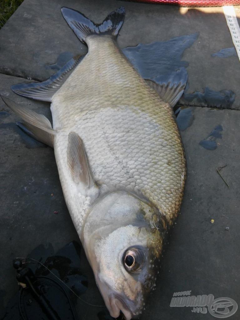 Ez volt a nap első hala…