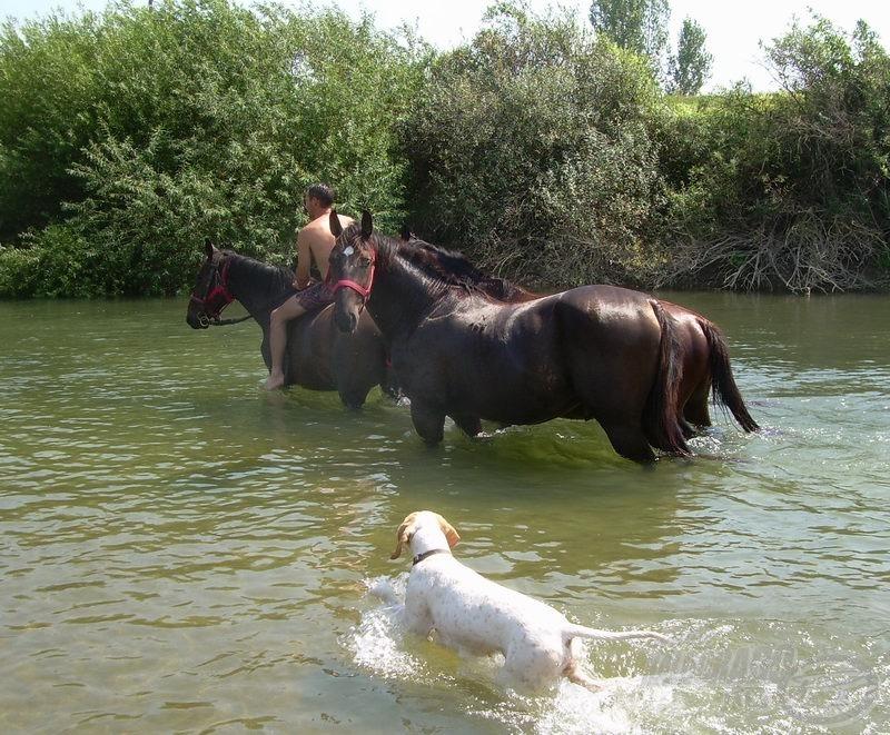 Ember és állat is sóvárog a kánikulában a hűsítő víz után