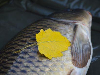 Feederbottal a Biztató Horgásztavon – Őszi türelemjáték 1. rész