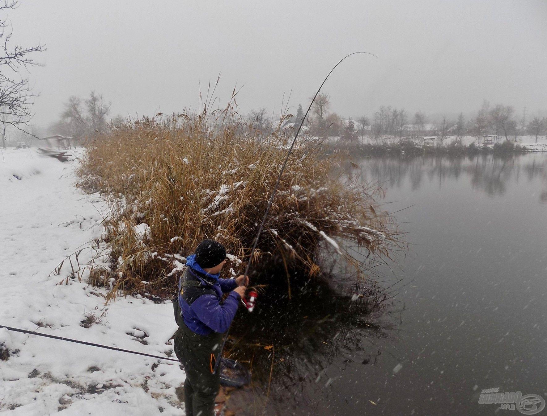 Túlzás nélkül állíthatom, hogy felejthetetlen élményekkel gazdagodhatunk a téli horgászatok során is, ha kellően kitartóak vagyunk. Egy-egy fárasztás, halfogás teljesen felértékelődik ebben az időszakban