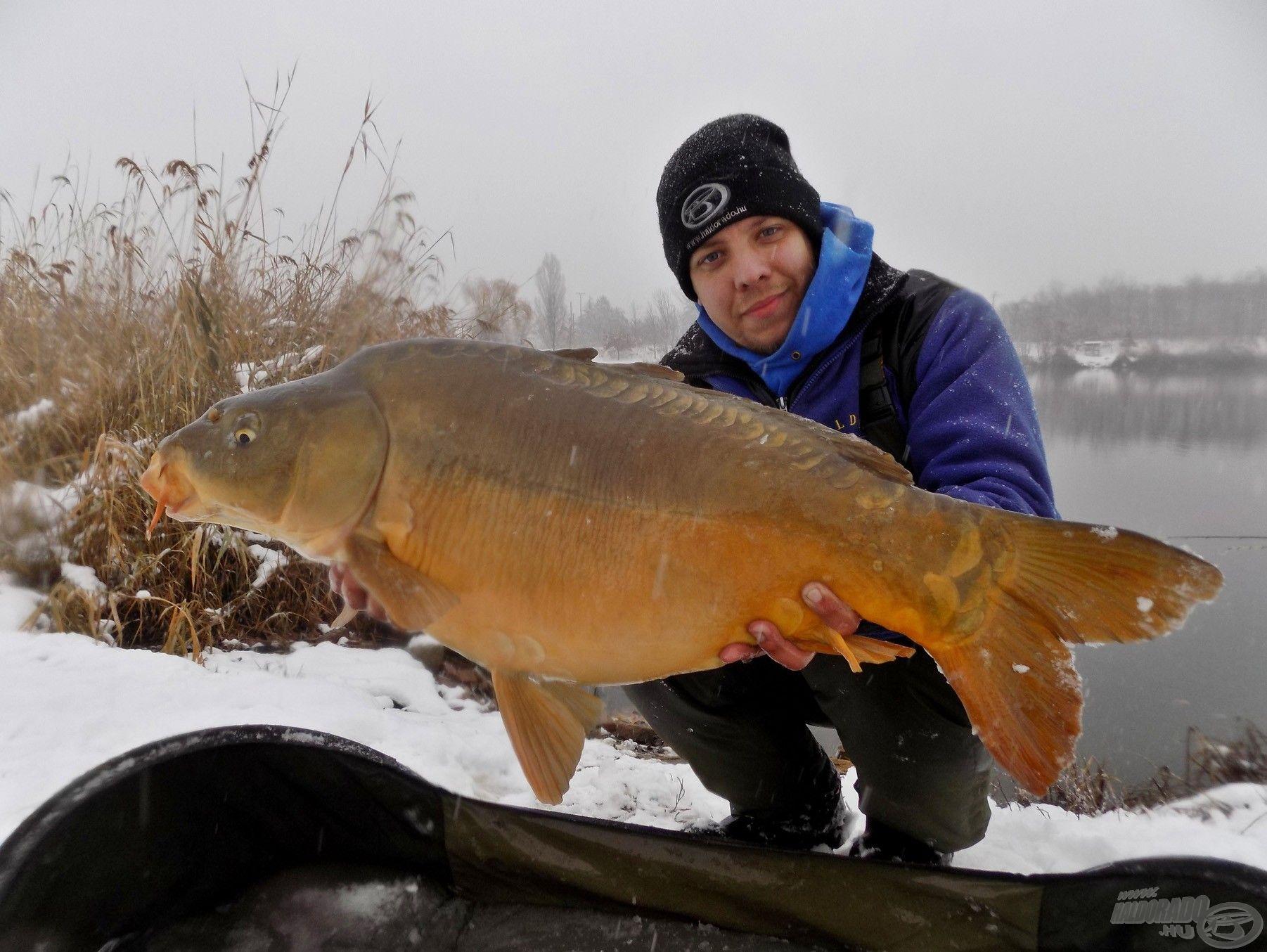 A horgászat végén, a legnagyobb havazásban egy hosszas csata után sikerült ezt a gyönyörű, színekben gazdag tükörpontyot megfognom! Borzasztó büszke vagyok erre a fogásra, ugyanis a körülmények nem éppen voltak horgászatra alkalmasak