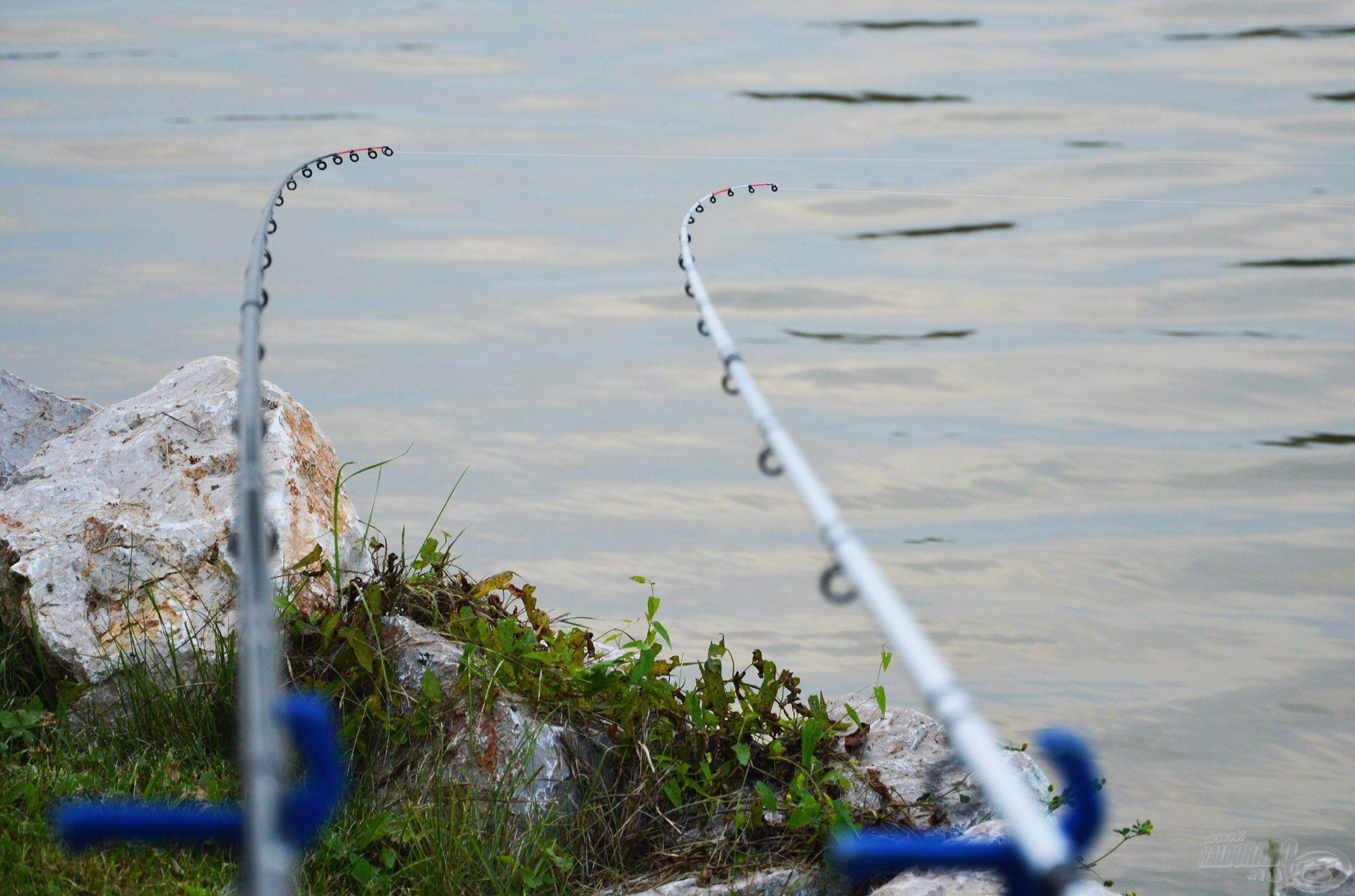 A spiccek készenlétben álltak, azonban beletelt némi időbe, mire az alapozó etetéssel járó csobogás után a halak újra a területre jöttek