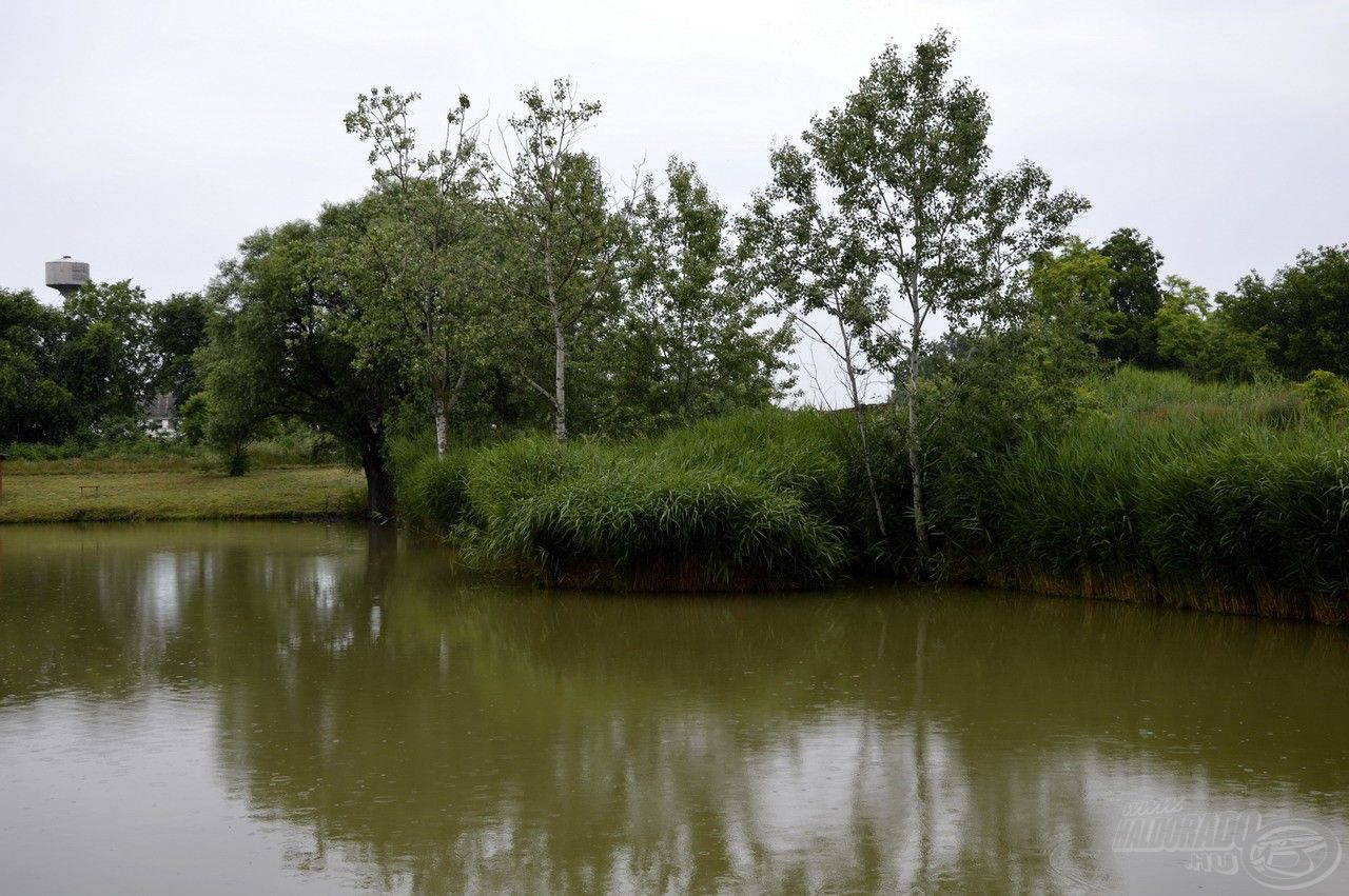 A szemközt, jobb oldalon lévő nádsziget kiváló, természetes haltartó hely. Az amurcsapatok rendszeresen felkeresik ezt a területet és táplálkoznak a nádfal peremén elérhető friss nádhajtásokból. Erről árulkodnak az itt-ott vízbe lógó szálak
