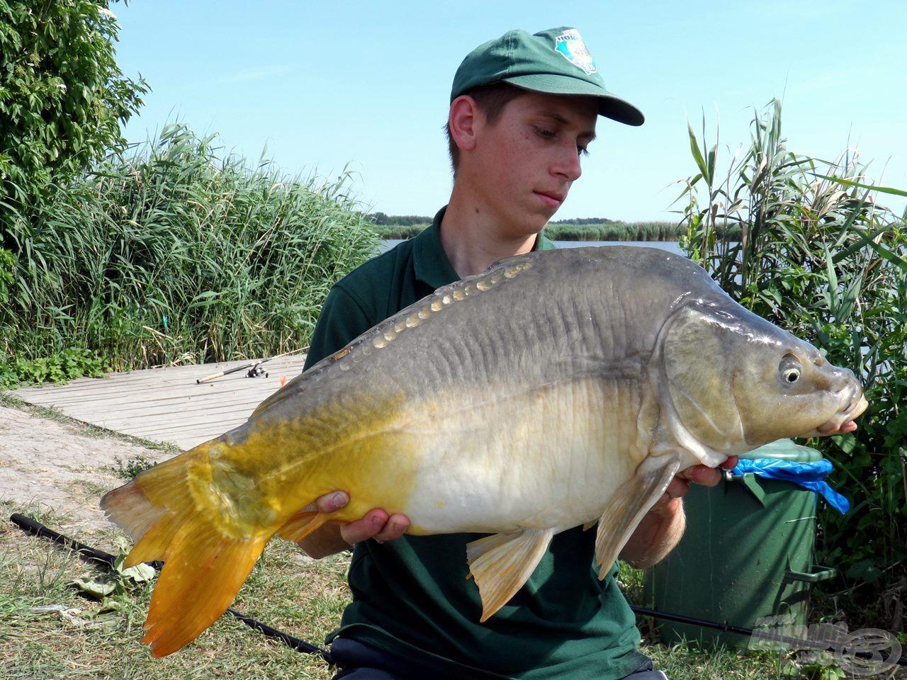 Gyönyörű, öreg, pocakos tükrös, mely a horgászat legnagyobb hala lett