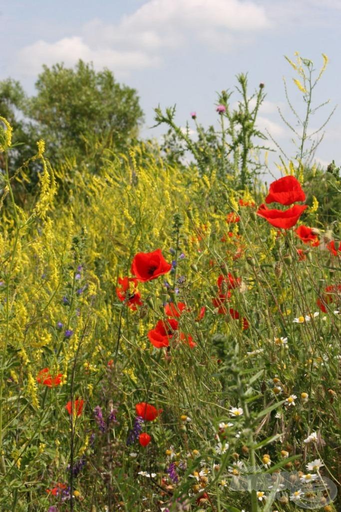A természetközeli érzetet keltő kellemes látvány mellett a virágok illatát is élvezhetjük
