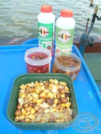 A csongrádi pontyok kedvence a főtt kukorica és tigrismogyoró keveréke, amely még fogósabb, ha finom aromában ázik