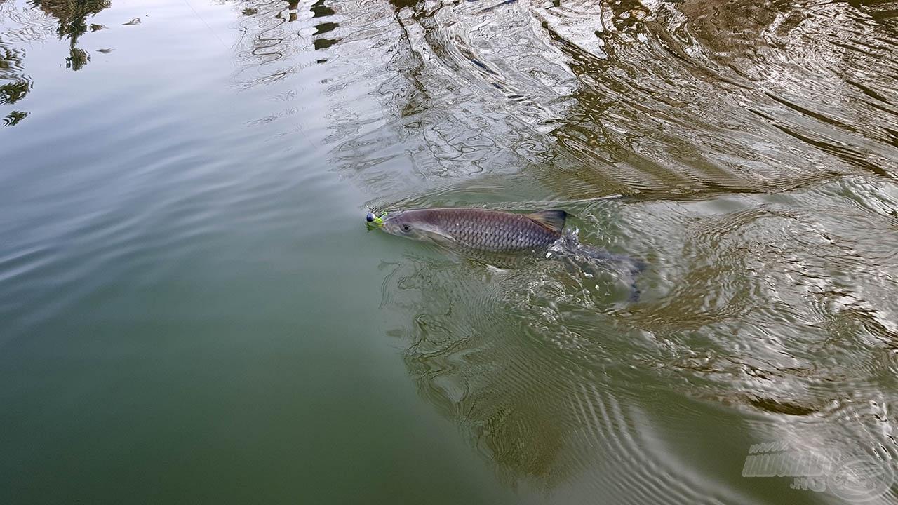 Halnak hal, az már biztos…