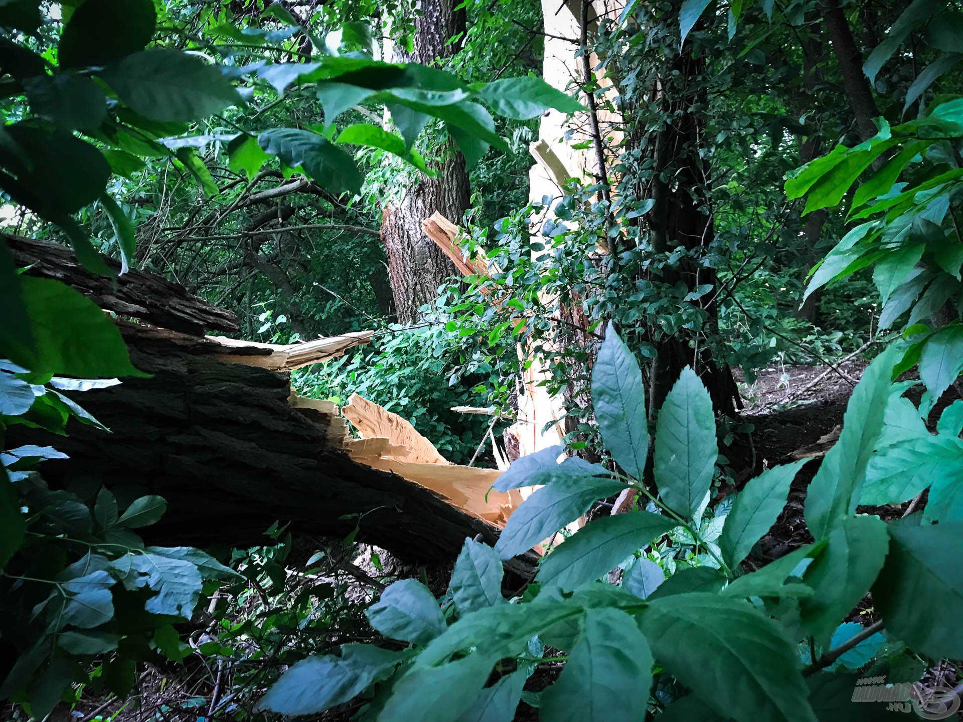 A fa vesztett a széllel vívott csatában
