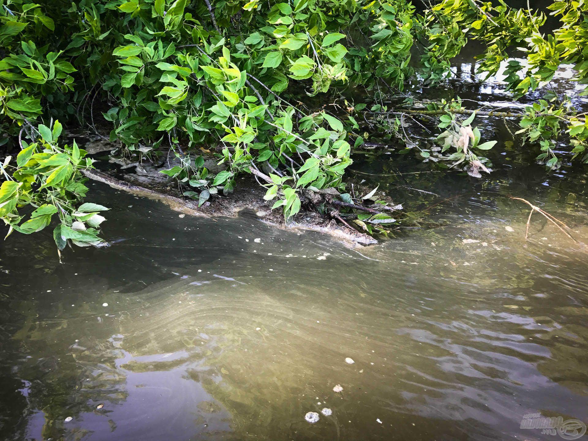 Az elvágó vizet a Tiszán mostanában folyamatosan úszó dzsuva is jelzi (sajnos), de biztos van rá sablon magyarázat