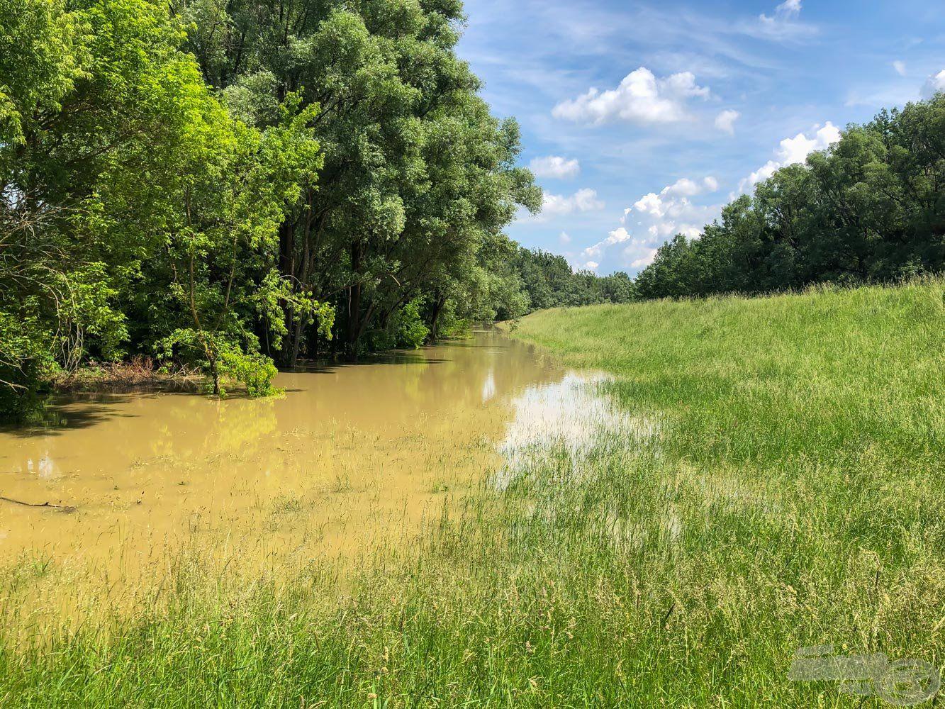 A töltésoldalig kijött a folyó, ami a főmedertől több száz méterre van