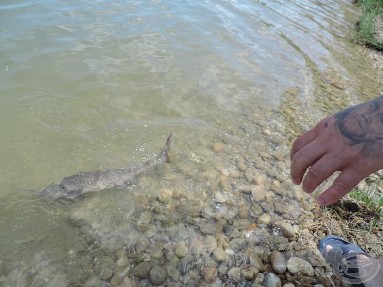 Tok barátunk gyorsan visszanyerte a szabadságát: látni, ahogy elsuhant a part menti kristálytiszta vízben. Remélem, pár év múlva újra találkozom vele