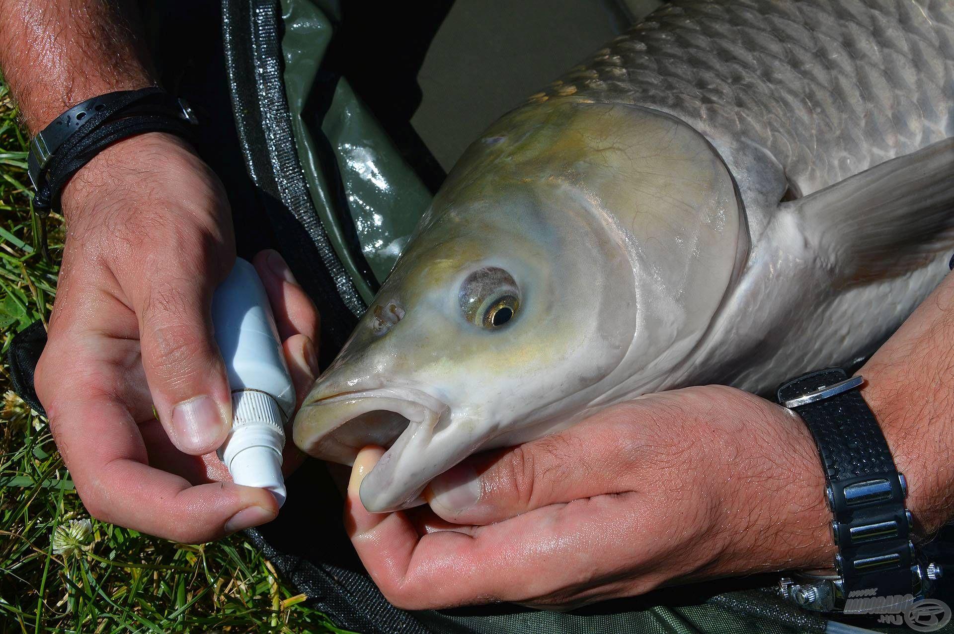Némi törődéssel és odafigyeléssel sokat tehetünk azért, hogy ezek a csodálatos halak még sokáig okozhassanak nekünk emlékezetes horgászélményeket!