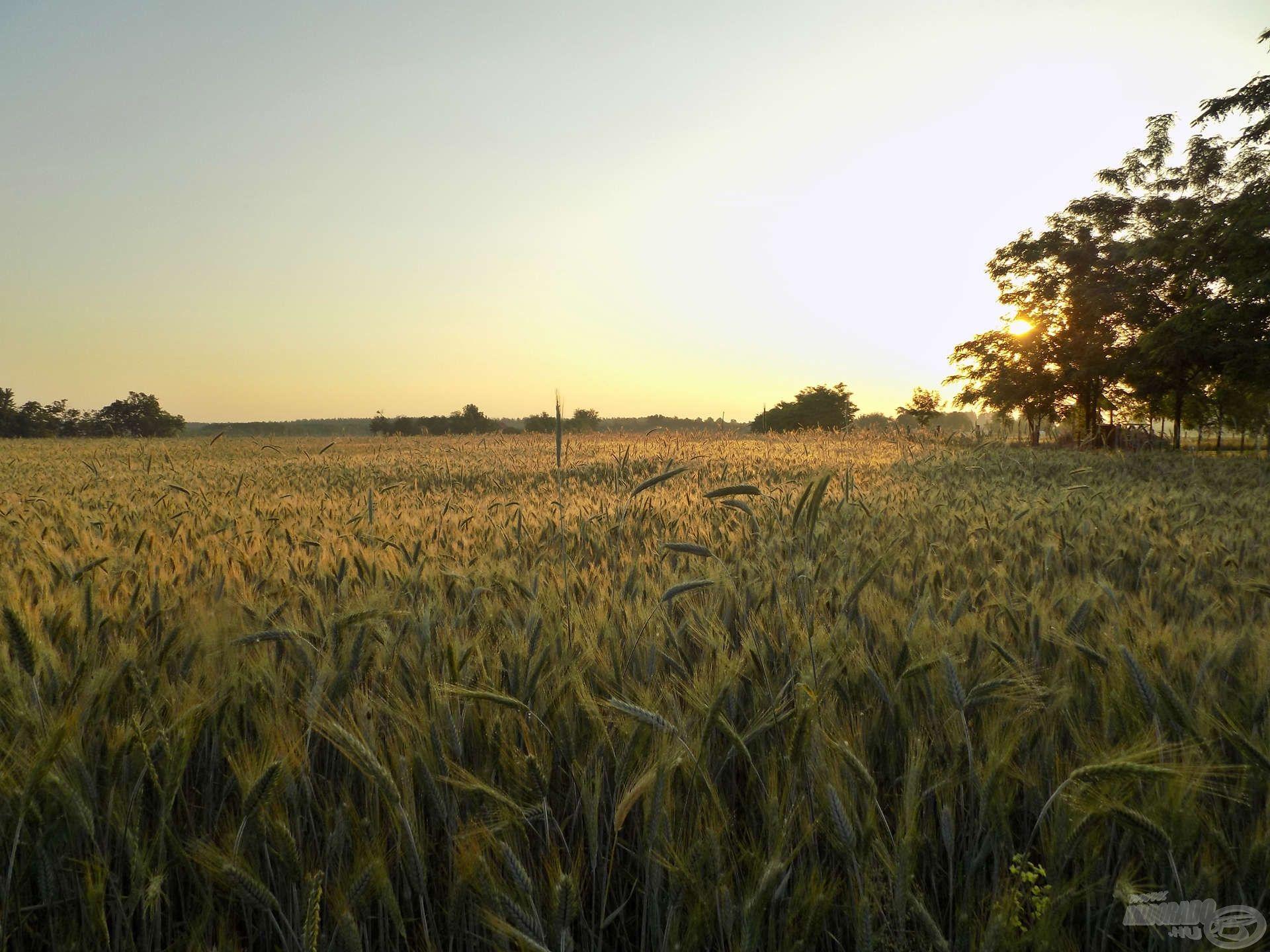 Csodálatos napfelkeltével összekötött panorámában gyönyörködhettem… remek érzés a természetben ébredni…