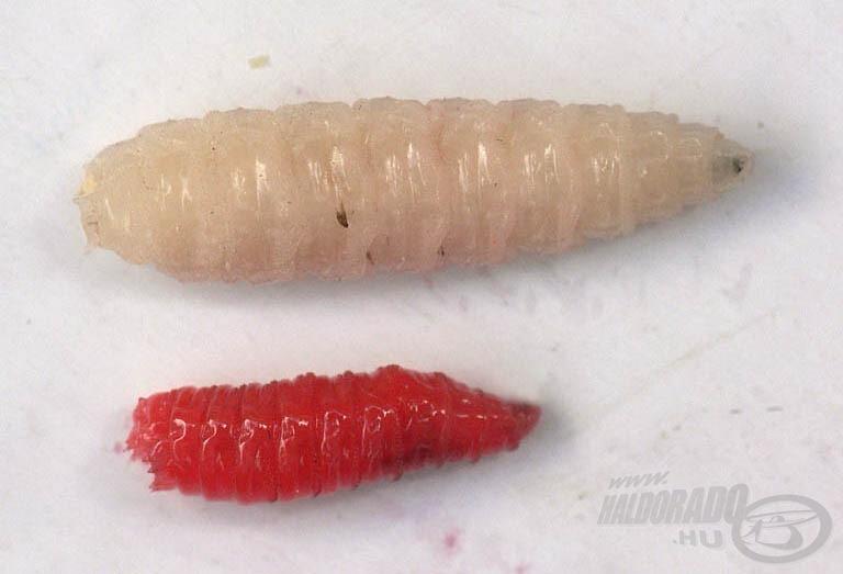A piros a normál, míg a fehér az óriás csonti - különbség szembetűnő!