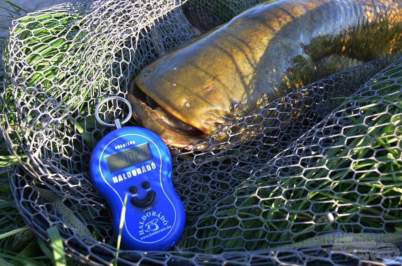 A második nap első hala mindjárt meghaladta a 10 kilogrammot!