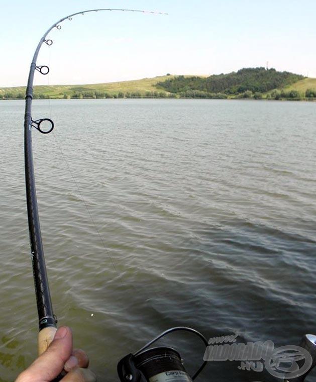 Élményszámba ment a 4-5 kilós halak fárasztása is, volt olyan, amit 10 kiló fölé tippeltem volna ereje alapján. A bot tökéletes teljesítményt nyújtott, és szerintem hibátlan a karakterisztikája