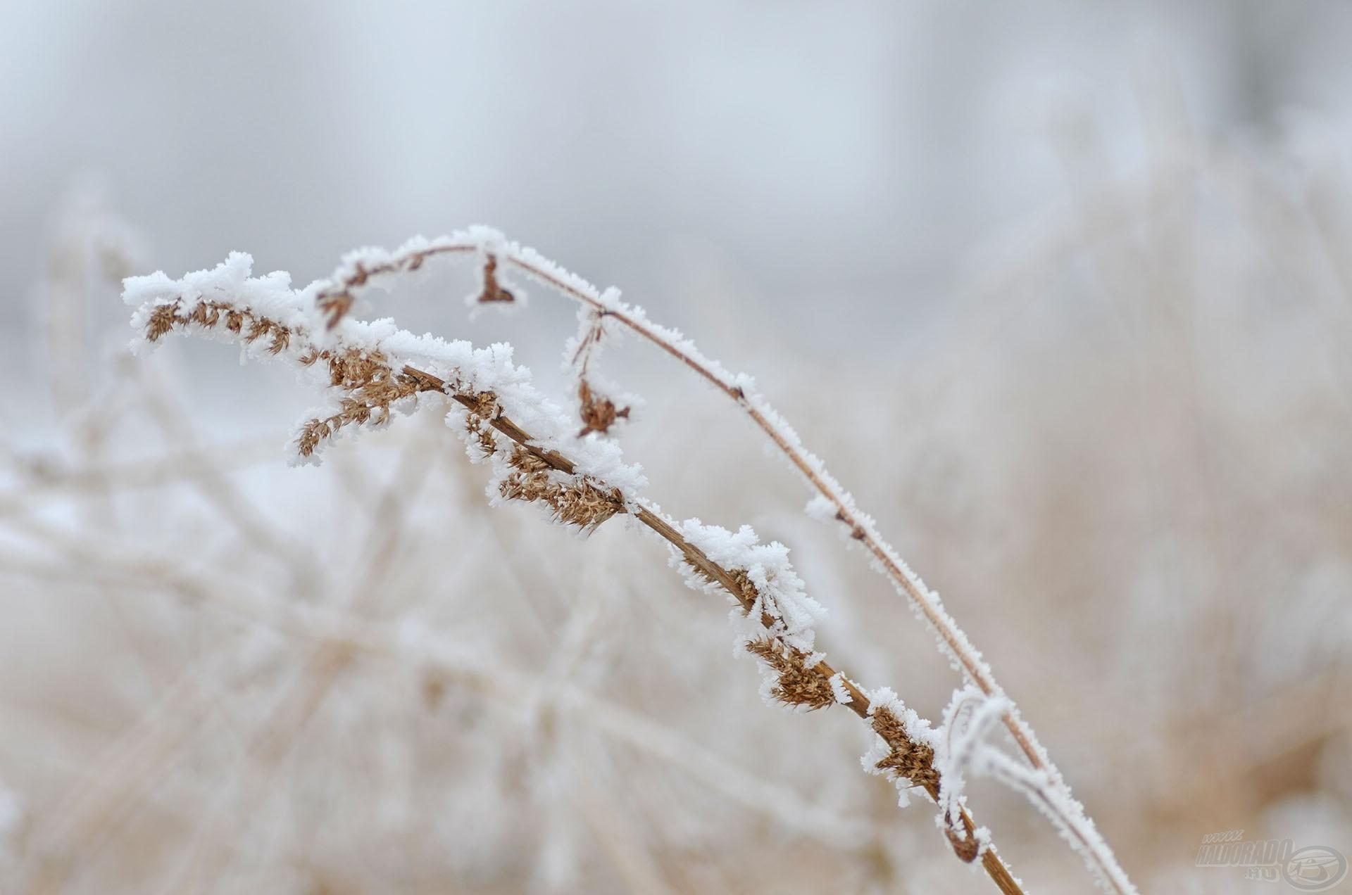Így jöttek létre ezek a szép jégvirágok