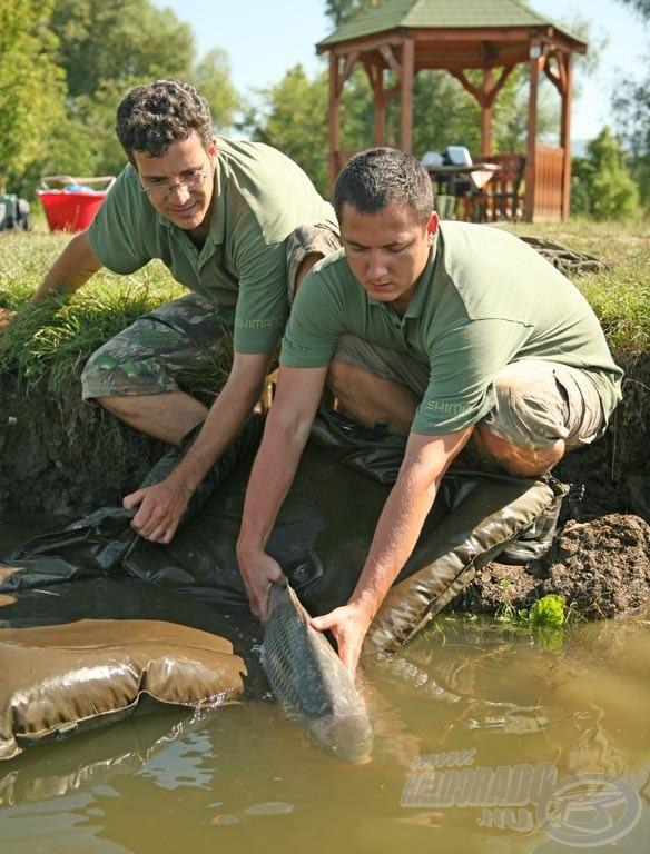 A halakkal való kíméletes bánásmód mindennél fontosabb!