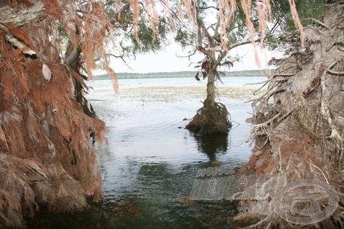 A nyár végén kezdődő vízeleresztés következtében a szigetek és a part menti fák lassan szárazra kerülnek