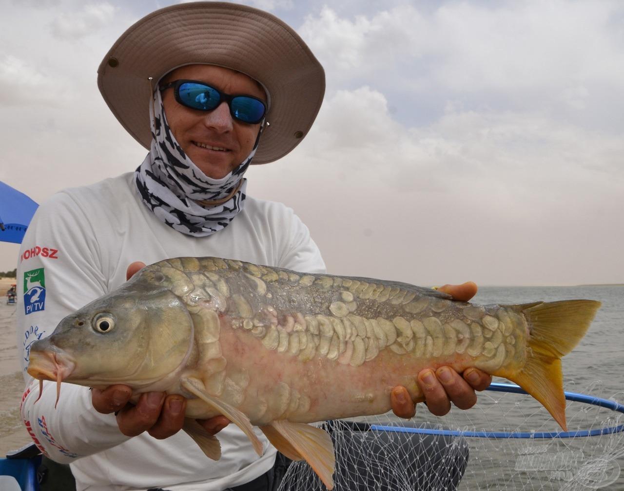 Döme Gábor különleges tükörpontya, amihez az is hozzátartozik, hogy a halak 99%-a itt tőponty