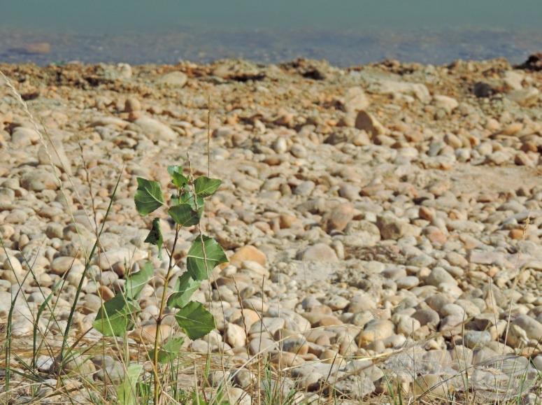 Sok növény már nem bírta a nagy meleget, sok helyen csak a sárgult fákat és bokrokat lehetett látni, így öröm volt nézni a zöldellő hajtásokat