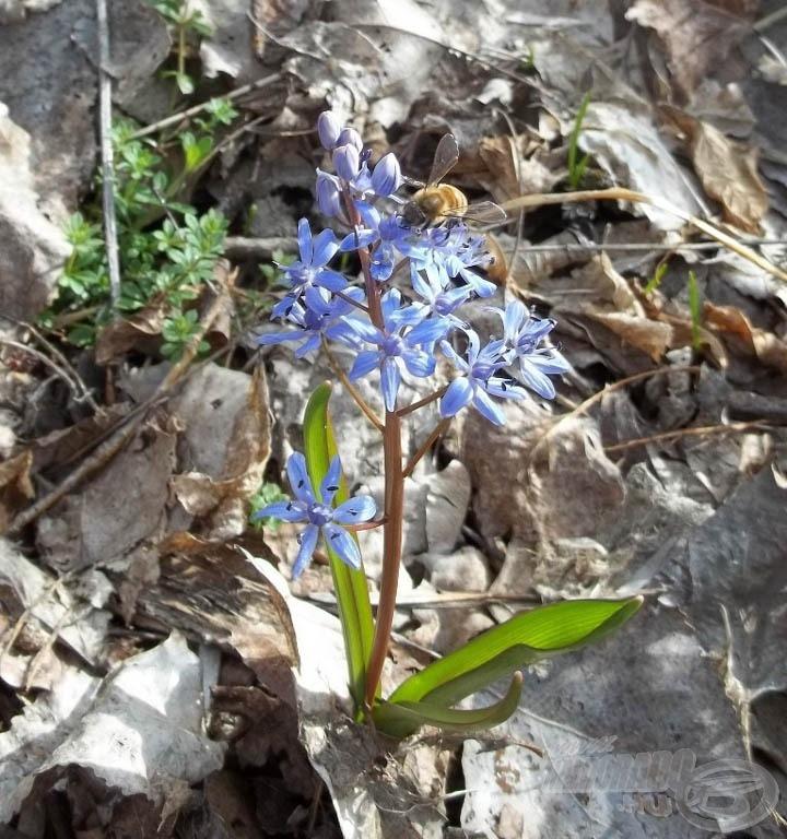 … az erdei virágok és a folyó illata bódított el engem is, és a virágport gyűjtő méheket is