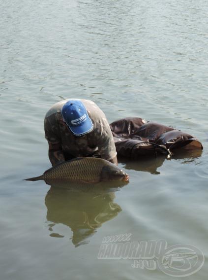 Érdemes mélyebb vízben elengedni a halat, így biztosan nem üti, karcolja meg magát, nem szenved semmilyen kisebb sérülést sem
